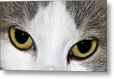 Metal Print featuring the photograph Cat Eyes by David Lester