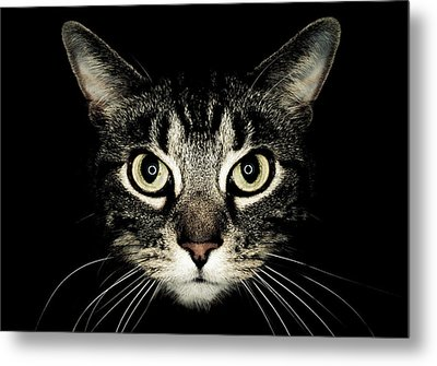 Cat Face Metal Print by by Jonathan Fife