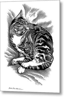 Cat Grooming Its Fur, Artwork Metal Print by Bill Sanderson