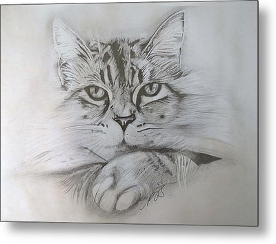 Cat I. Metal Print by Paula Steffensen