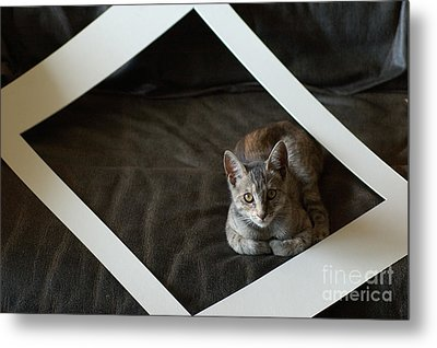 Cat In A Frame Metal Print by Micah May