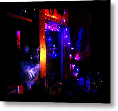 Metal Print featuring the photograph Cat In The Night Kitchen by Susanne Still