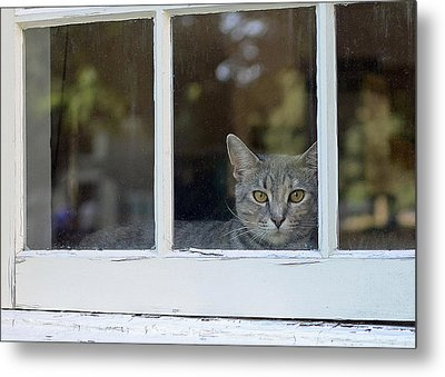 Cat In The Window Metal Print by Lisa Phillips