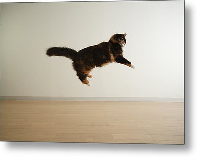 Cat Jumping In Air Metal Print by Junku