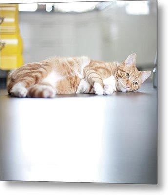 Cat Lying On Floor Metal Print by Paula Daniëlse