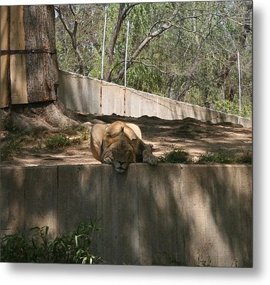 Metal Print featuring the photograph Cat Nap by Stacy C Bottoms