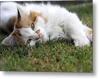 Metal Print featuring the photograph Cat On The Grass by Raffaella Lunelli