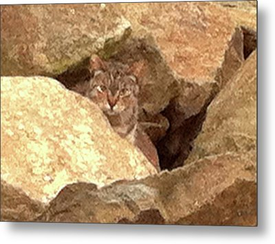 Cat On The Rocks Metal Print