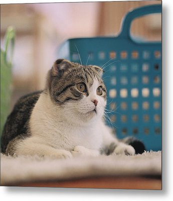 Cat Sitting On Floor Metal Print by Jiyeon-Agnes, Lee loves Analog images by Films!