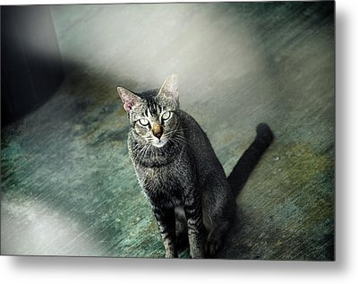 Cat Sitting On Floor Metal Print by Raj's Photography