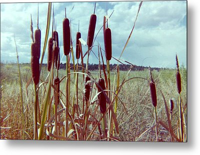 Metal Print featuring the photograph Cat Tails by Bonfire Photography