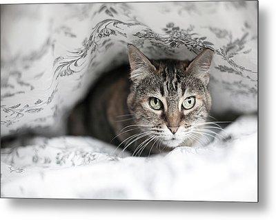 Cat Under In Blankets Metal Print by Image taken by Mayte Torres