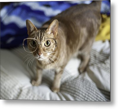 Cat With Glasses Metal Print by Www.sharp-photo.com