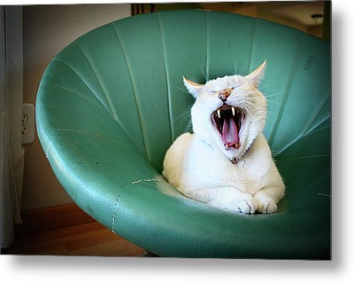 Cat Yawning In A Vintage Blue Green Chair Metal Print by Carrie Anne Castillo