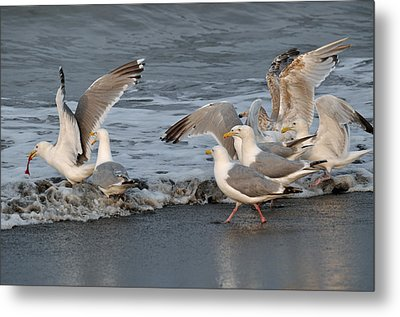 Catch Me If You Can  Metal Print by Debra  Miller