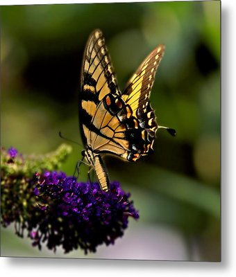 Catch Me If You Can Metal Print by J Cheyenne Howell