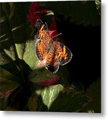 Metal Print featuring the photograph Catching Rays by Michael Friedman