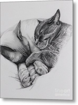 Catching Some Shuteye Metal Print by Margit Sampogna