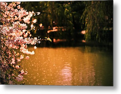 Catching The Light Of Spring Metal Print by Vivienne Gucwa