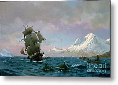 Catching Whales Metal Print by J E Carl Rasmussen
