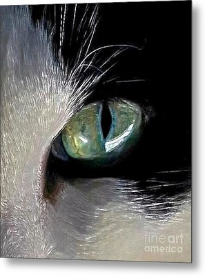 Cat's Eye Metal Print by Dale   Ford