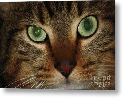 Metal Print featuring the photograph Cat's Eye by Yumi Johnson