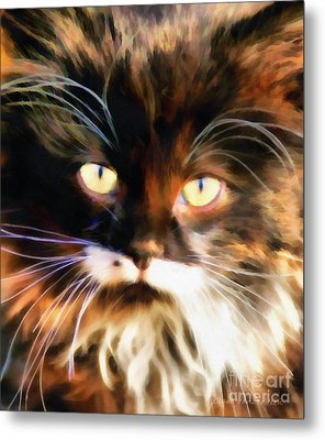 Cats Eyes Metal Print by Clare VanderVeen