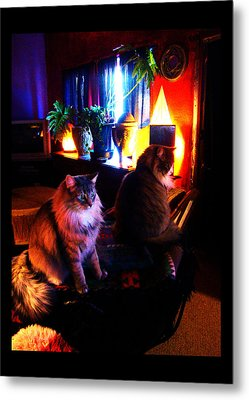 Metal Print featuring the photograph Cats On A Drum by Susanne Still