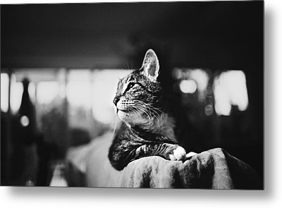 Cats Portrait Metal Print
