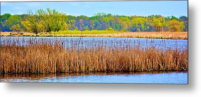 Metal Print featuring the photograph Cattails by Joe Urbz