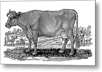 Cattle Metal Print by Granger