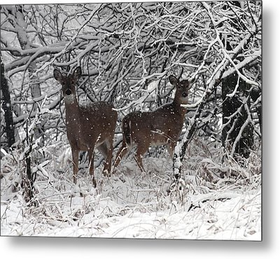 Metal Print featuring the photograph Caught In The Snow Storm by Elizabeth Winter
