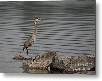 Metal Print featuring the photograph Cautious by Eunice Gibb