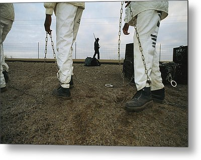 Chain Gang Prisoners Being Watched Metal Print by Bill Curtsinger