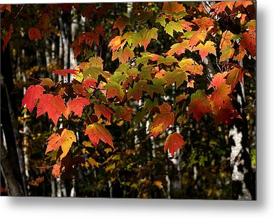 Changing Of The Colors Metal Print by Rich Franco