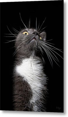 Charlie Boy Metal Print by Derek Byrne