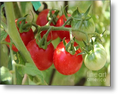Cheery Tomatoes Metal Print