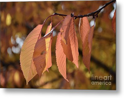 Metal Print featuring the photograph Cheery Tree Sheets 1 by Bruno Santoro