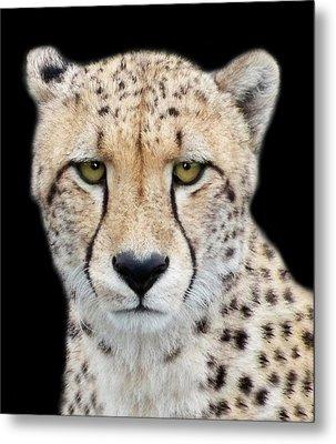Metal Print featuring the photograph Cheetah by Lynn Bolt