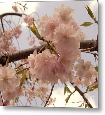 Metal Print featuring the photograph Cherry Blossom 2 by Andrea Anderegg