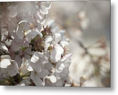 Metal Print featuring the photograph Cherry Blossom 2 by Lisa Missenda