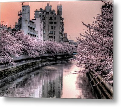Cherry Blossom Metal Print by Akirat2011, All Right Reserved.