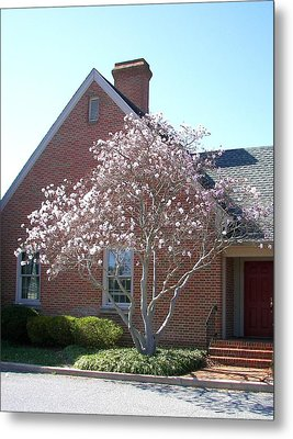 Metal Print featuring the photograph Cherry Blossom by Pamela Hyde Wilson