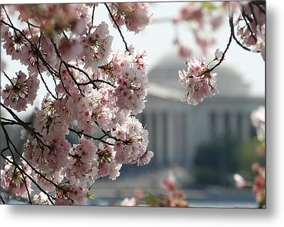 Cherry Blossom Washington Metal Print by Valia Bradshaw