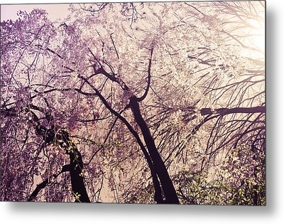 Cherry Blossoms - New York City Metal Print by Vivienne Gucwa