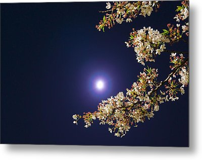 Cherry Blossoms Metal Print by GLIDEi7