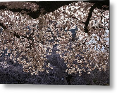 Metal Print featuring the photograph Cherry Blossoms by Jerry Cahill