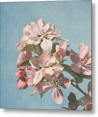 Cherry Blossoms Metal Print by Kim Hojnacki