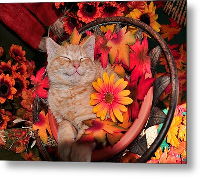 Cheshire Cat Dreaming Of Catching Mice Metal Print by Chantal PhotoPix