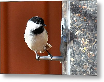 Metal Print featuring the photograph Chickadee by Cheryl McClure